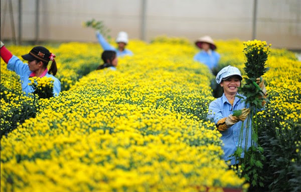 Thủ tục đi Xuất khẩu lao động Hàn Quốc như thế nào?